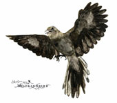 John Zorn (Composer): The Mockingbird [Digipak]